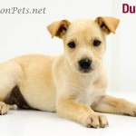 Two-for-one puppies at Walton Animal Shelter