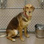 Adoptable Georgia Dogs for November 27, 2014