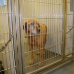 Adoptable Georgia Dogs for March 8, 2013
