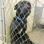 Adoptable Georgia Dogs for April 1, 2013