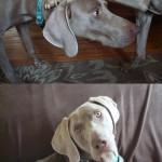 Adoptable Georgia Dogs for April 30, 2013