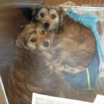 Georgia Adoptable Dogs for May 14, 2013