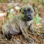 Adoptable Georgia Dogs for May 24, 2013