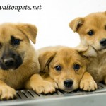 Adoptable Georgia Dogs for June 12, 2013