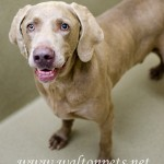 Adoptable Georgia Dogs for July 9, 2013