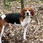 Adoptable Georgia Dogs for September 6, 2013