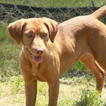 Adoptable Georgia Dogs for October 7, 2013