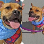 Adoptable Georgia Dogs for October 17, 2013