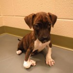 Adoptable Georgia Dogs for October 24, 2013