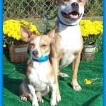 Adoptable Georgia Dogs for November 13, 2013