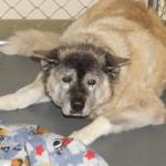Adoptable Georgia Dogs for December 6, 2013