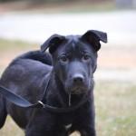 Adoptable Georgia Dogs for January 24, 2014