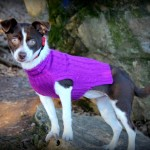 Adoptable Georgia Dogs for February 5, 2014