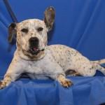 Adoptable Georgia Dogs for February 7, 2014