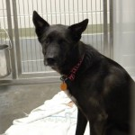 Adoptable Georgia Dogs for March 27, 2014