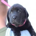 Adoptable Georgia Dogs for May 23, 2014