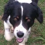 Adoptable Georgia Dogs for May 28, 2014
