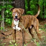 Adoptable Georgia Dogs for May 2, 2014