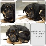 Adoptable Georgia Dogs for June 9, 2014