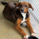Adoptable Georgia Dogs for July 25, 2014