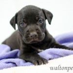 Adoptable Georgia Dogs for July 1, 2014