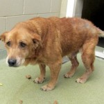 Adoptable Georgia Dogs for July 23, 2014