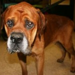 Adopt us — Effingham animal shelter | savannahnow.com
