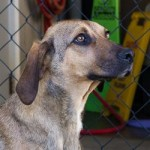 Adoptable Georgia dogs for August 27, 2014