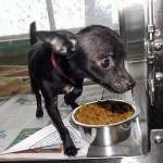 Adoptable Georgia Dogs for August 14, 2014