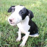 Adoptable Georgia Dogs for August 29, 2014