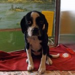 Adoptable Georgia Dogs for October 22, 2014