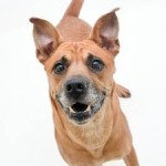 Adoptable Georgia Dogs for November 21, 2014
