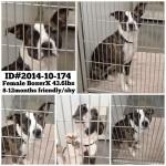 Adoptable Georgia Dogs for November 3, 2014