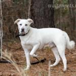 Adoptable Georgia Dogs for December 5, 2014