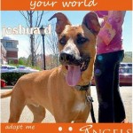 Adoptable Georgia Dogs for December 17, 2014