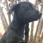 Adoptable Georgia Dogs for December 8, 2014
