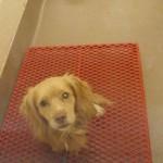 Adoptable Georgia Dogs for January 16, 2015