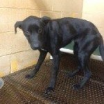 Adoptable Georgia Dogs for January 13, 2014