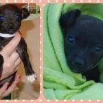 Adoptable Georgia Dogs for January 9, 2015
