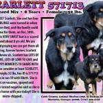 Adoptable Georgia Dogs for February 5, 2015