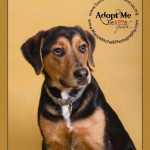 Adoptable Georgia Dogs for March 9, 2015