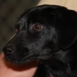 Adoptable Georgia Dogs for April 28, 2015