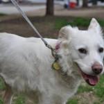 Adoptable Georgia Dogs for April 6, 2015