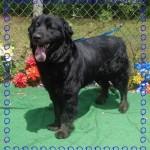 Adoptable Georgia Dogs for May 26, 2015
