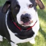 Adoptable Georgia Dogs for May 21, 2015