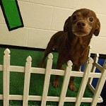 Adoptable Georgia Dogs for May 18, 2015
