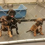Adoptable Georgia Dogs for June 15, 2015