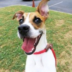Adoptable Georgia Dogs for June 11, 2015