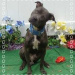 Adoptable Georgia Dogs for July 23, 2015