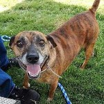 Adoptable Georgia Dogs for August 20, 2015
